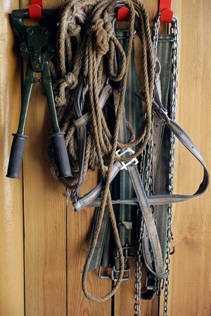 Horse riding reigns and ropes