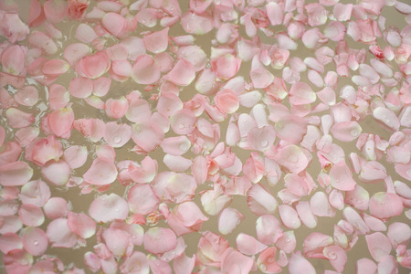 pink petals floating on water