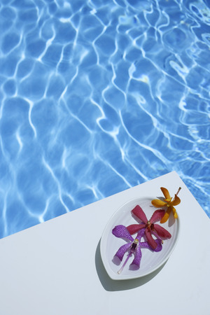 poolside: Dendrobium orchids in dish, poolside LANG_EVOIMAGES