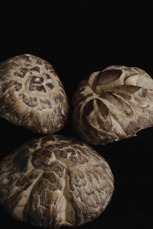 Mushrooms used for Chinese medicine Banque d'images