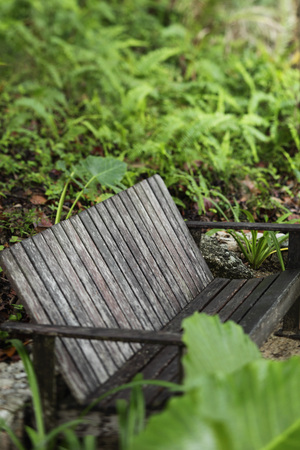wooden bench surrounded by plants Stock Photo - 77280425