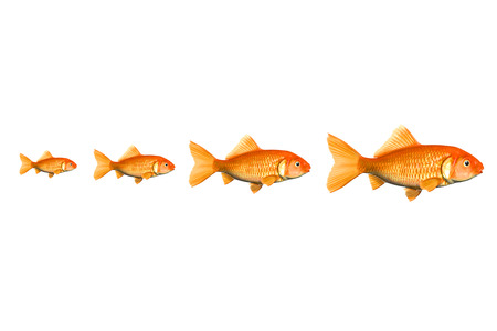 goldfish jump: red fish business