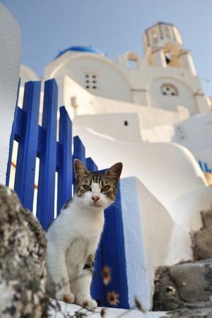 Cat in Santorini Stock Photo