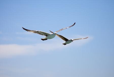 Flying seagulls at sunrise. photo