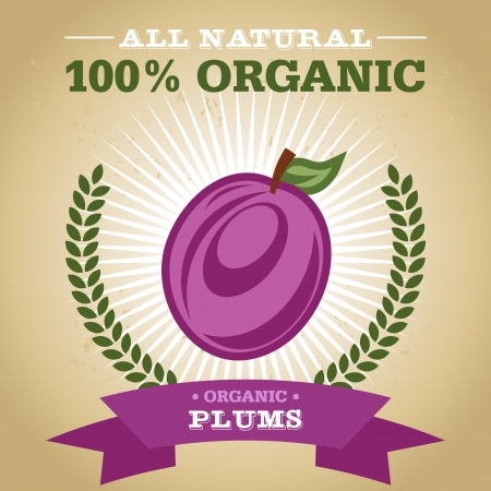 Vintage retro organic fruit design poster with plum icon Vector