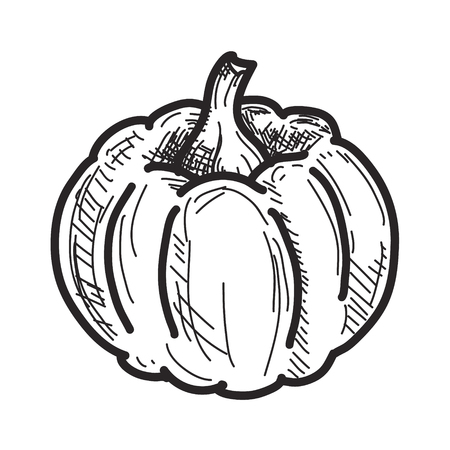 schets: Pumpkin sketch isolated on white