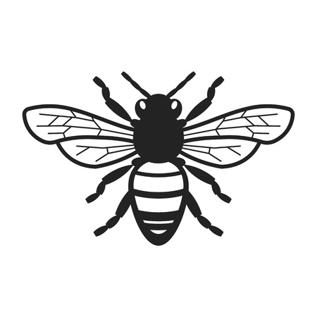 Honey Bee Illustration