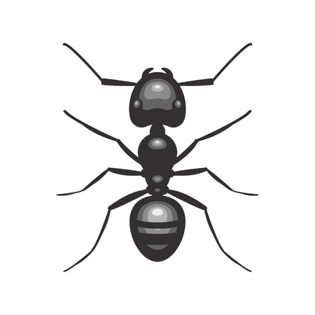 Black ant insect illustration