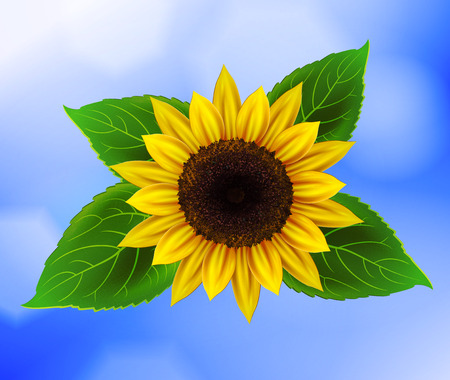 Vector sunflower with green leaves Vector