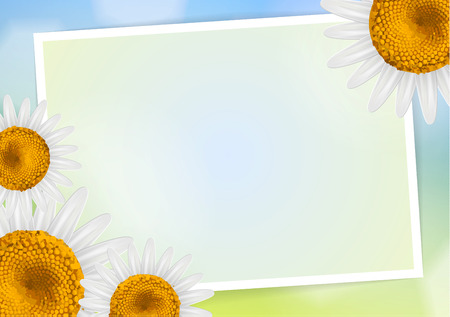 free space: Daisy flower frame with empty space and free space