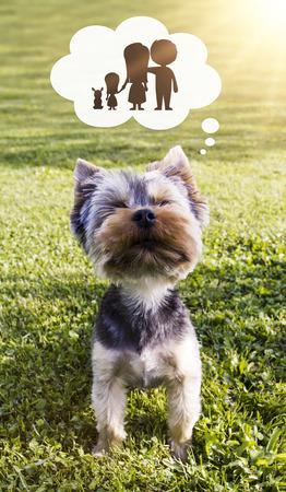 Dog adoption concept