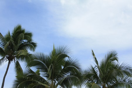 Tropical background with blue sky, clouds and palm trees