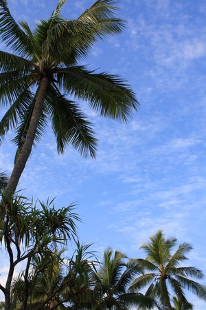 Idyllic tropical background with palms and blue sky, with plenty of copyspace photo