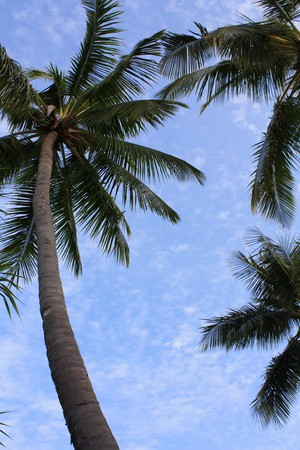 Background with blue sky and palms photo
