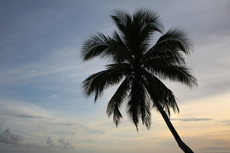 Single palm tree silhouetted against a sunset sky Stock Photo