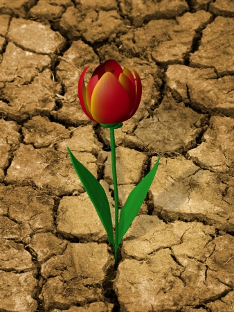 drought    resistant plant: Single, drought resistant flower, on a dry, cracked ground