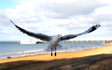 Close up of seagull landing on beach