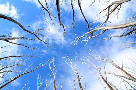 Background with blue sky, clouds and trees with snow Stock Photo