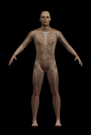 3D rendering of man with superimposed skeleton.  The man is a generic figure, any resemblance to real people is purely coincidental.