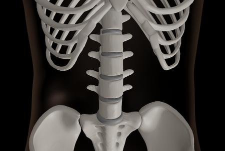 3d rendering of the lumbar spine area of the skeleton
