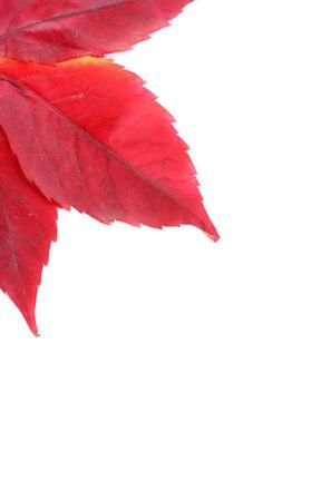 season specific: red leafs in autumn, season specific, nature, corner