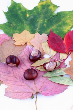 season specific: leaves leafs and chesnuts, autumn, nature, season specific