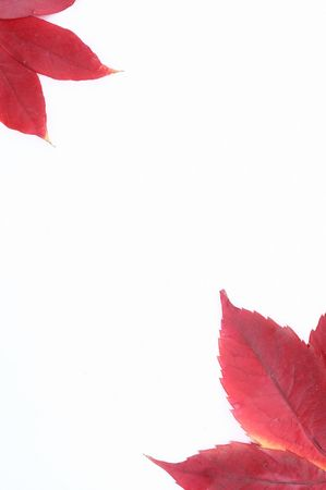 season specific: red leafs in autumn, season specific, nature Stock Photo
