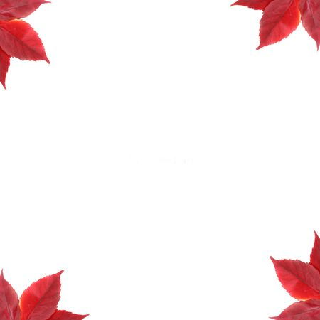 a stem here: leafs background frame, leaves, autumn