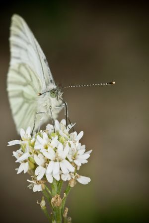 butterfly on the white flower, beauty of nature