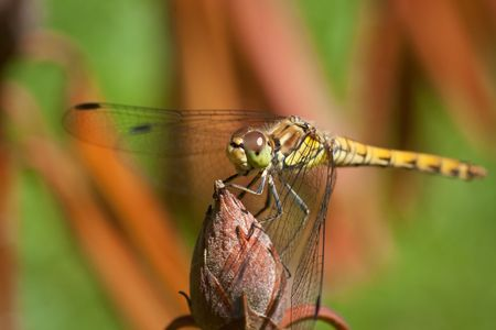 dragonfly, extreme closeup of insect, beautiful nature Stock Photo