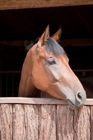 head of a horse in stable, big, beautiful animal Stock Photo
