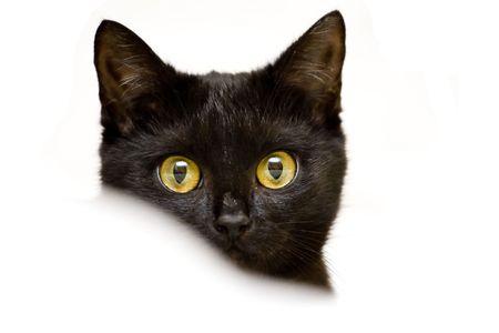 little kitten, beautiful small black cat