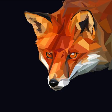 Smart orange red fox on dark background Illustration