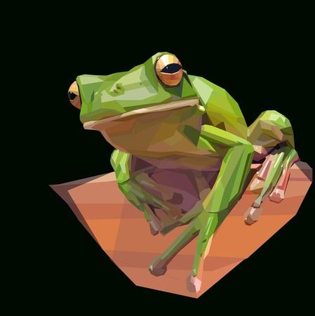 green tree frog sitting on dark background