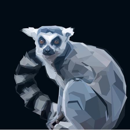 tailed: Sitting gray ring tailed lemur on dark background Illustration