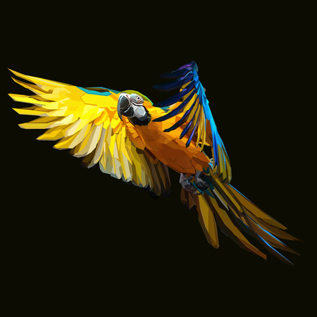 Exotic Macaw parrot flying on dark background