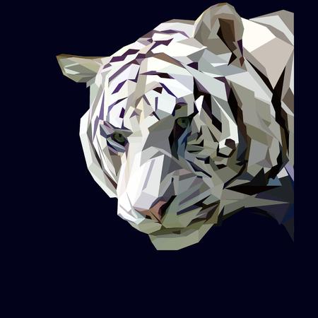 cool white tiger head on dark background Illustration