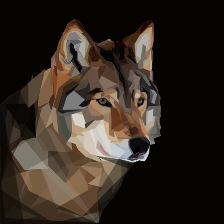 timber wolf: Cool timber wolf head on dark background