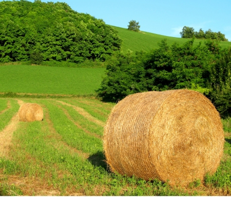 Field of cutted grass with two sheaves of hay