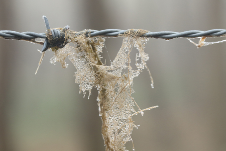 Leaf decomposing on barbed wire in the forest
