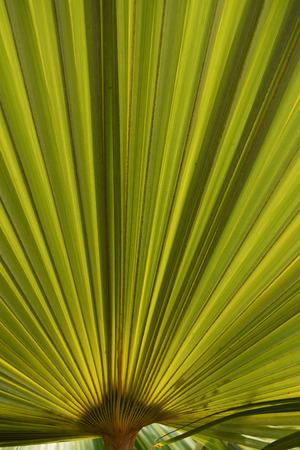 natures: Natures fabric