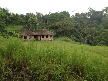 ubud: Ubud fields