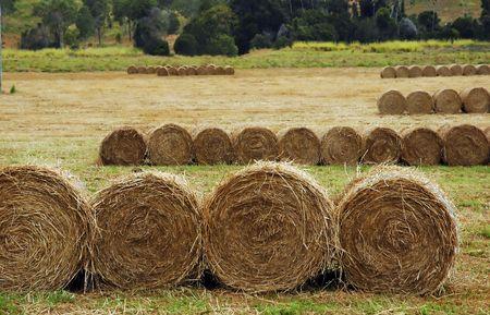 rolls of hay, Queensland, Australia photo