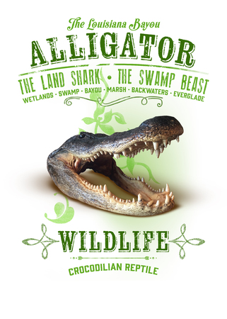 New Orleans Louisiana Culture Collection Alligator
