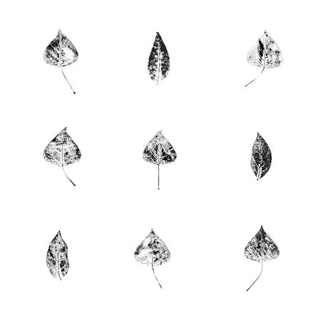 本性印刷。ユニークな手作りの葉スタンプ。植物のテクスチャの葉のセットです。画像は、印刷、テキスタイル、インテリア デザインに適していま