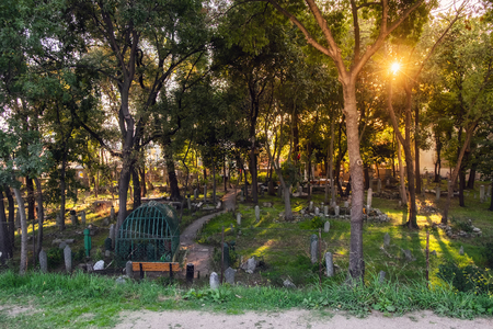 Muslim cemetery in october Istanbul view with evening sunset sun shining from trees