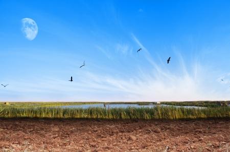 lejos: Natural del suelo seco Fondo Campo