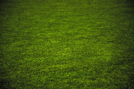 Grass Stock Photo - 14403412