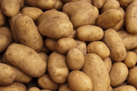 Potato Crop Texture Stock Photo - 14517110