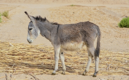 Young Donkey Grazing Under Day Light